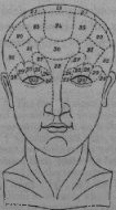 A phrenological diagram